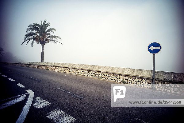 Street with a palm tree and a unique traffic sign direction Mahon Menorca  Balearic Islands  Spain  Europe.