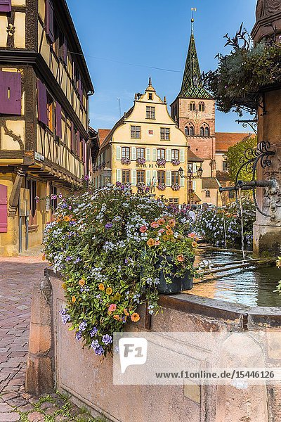 Typic old small village Turckheim  Alsace  France  tourist destination with framework and old houses.