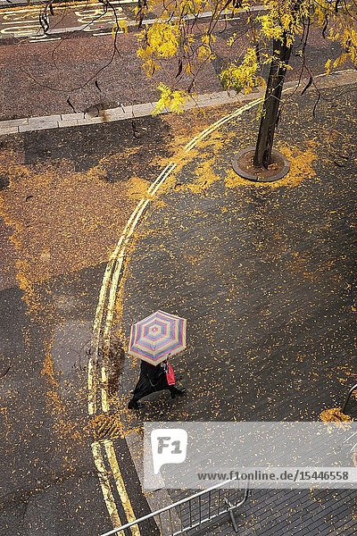 England London Belvedere Road- october colours  Fallen leaves cover the wet pavement on a rainy day.