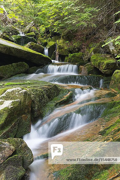 Cascade on Cold Brook in Randolph  New Hampshire during the summer months.