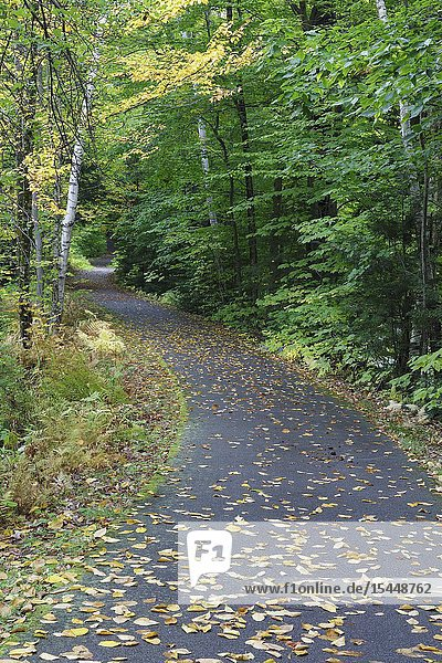 Autumn foliage along the paved biking / walking path between Pollard Brook and the entrance to Loon Mountain in Lincoln  New Hampshire.