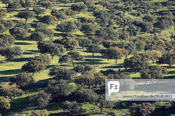 View of the grassland from the castle. National park Monfragüe. Cáceres.