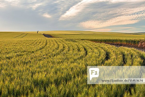 Oregon farm land helps provide bread to people all over the world.