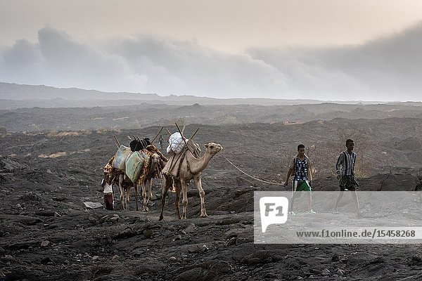 A caravan of camels and tourists traversing the barren volcanic landscape surrounding the Erta Ale Volcano in the Afar Region of Ethiopia.