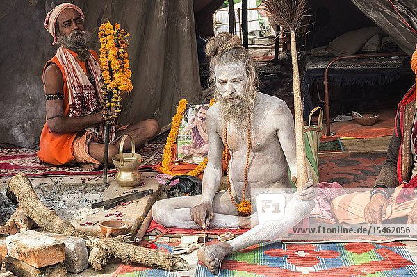 White ashes covered Sadhu with dreadlocks turned around his head  For editorial use only  Allahabad Kumbh Mela  World's largest religious gathering  Uttar Pradesh  India.