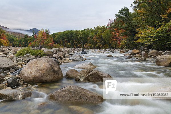 Autumn foliage along the East Branch of the Pemigewasset River in Lincoln  New Hampshire during the autumn months.