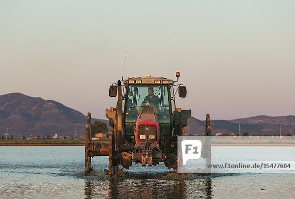 A tractor is used for sowing rice seeds in the flooded rice fields. Environs of the Ebro Delta Nature Reserve  Tarragona province  Catalonia  Spain.