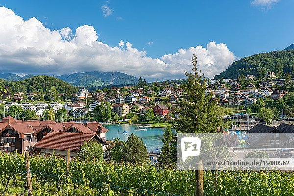 Townscape with Lake Thun  Spiez  Bernese Oberland  Switzerland  Europe.