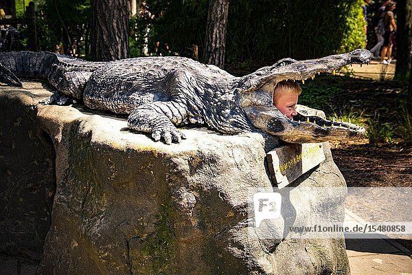 Head of a child sticking out of the mouth of a crocodile in Beekse Bergen zoo  The Netherlands  Holland.