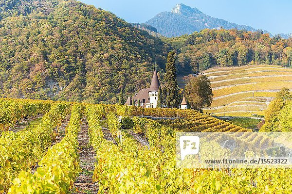 Chateau Maison Blanche  Yvorne  Canton of Vaud  Switzerland.