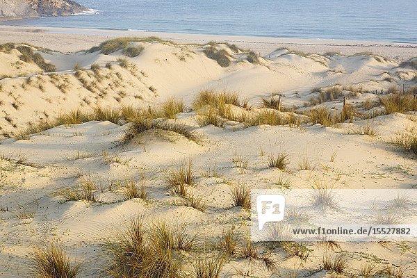 Sand dunes at Cala Mesquida  Capdepera  Majorca  Spain.