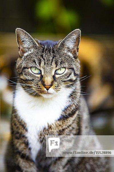 Portrait of a cat in a garden.