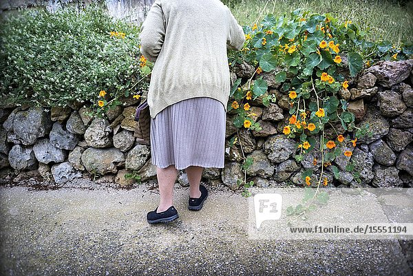 Back view of an unrecognizable old lady picking flowers Mahon  Baleares  Spain  Europe.