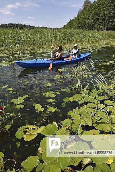 Canoe trip among the nenufars (Nuphar) on the lake Asekas around Ginuciai  Aukstaitija National Park  Lithuania  Europe.