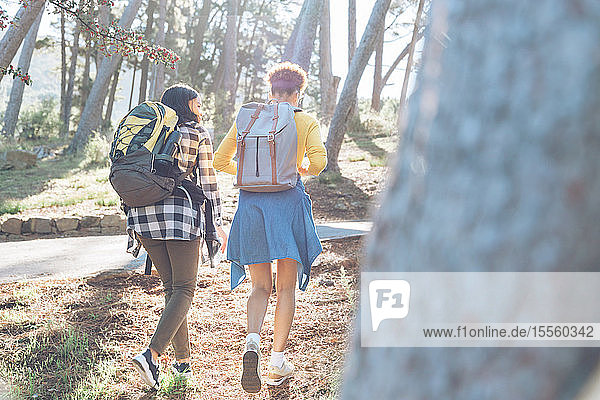 Young women friends with backpacks hiking in sunny woods