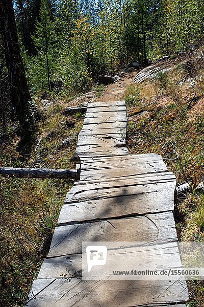 Wooden boards connect key prts of a mountain bike trail in Castlegar  British Columbia.