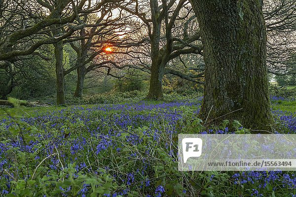 Spring sunrise in South Downs National Park  West Sussex  England.