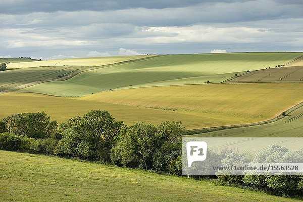 Summer in South Downs National Park  West Sussex  England.