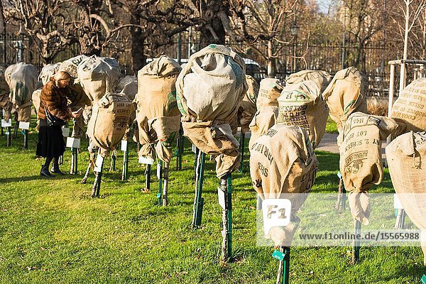 Young saplings covered to protect them from winter frost in and snow in the Volksgarten - Vienna  Austria.