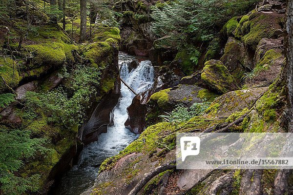 Lower Avalanche Gorge is one of the highlights of hikinh the Avalanche Lake trail in west Glacier  Glacier National Park.