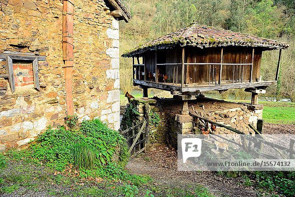 Traditional Asturian granary. Green Path of Trubia river or Bear's Path  between Tuñon and San Andres  Asturias  Spain