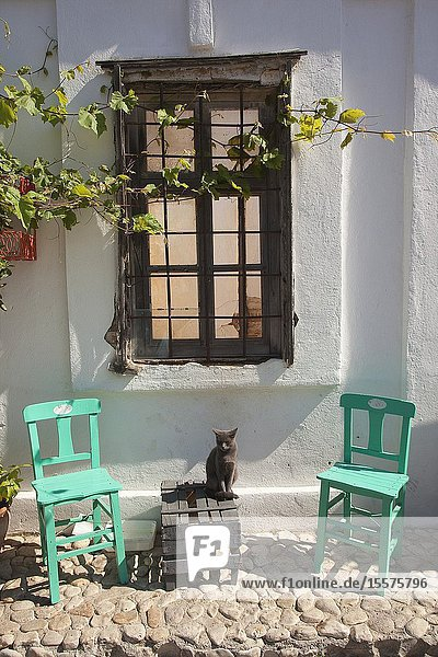 Cat sitting at the street in front of a traditional house in the town center of the ancient Tenedos todays Bozcaada island  Bozcaada  Canakkale  Aegean Region  Turkey