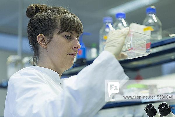 Junge Naturwissenschaftlerin arbeitet im Laboratorium
