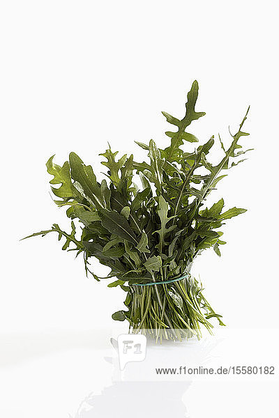 Single bunch of rocket on white background