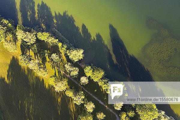 Drohnenaufnahme von Bäumen mit Schatten auf grüner Landschaft in Bayern  Deutschland