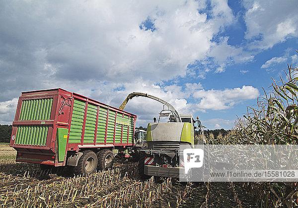 Deutschland  Maisernte mit landwirtschaftlichen Fahrzeugen