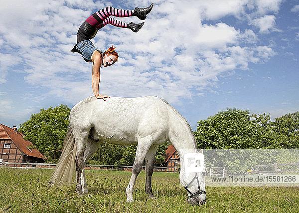 Frau macht Handstand auf weissem Pferd