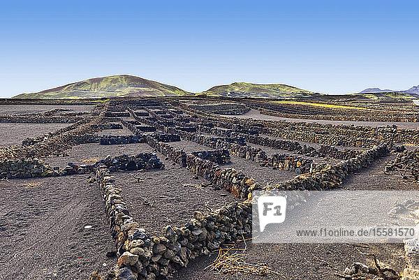 Spanien  Kanarische Inseln  Lanzarote  Weinanbaugebiet