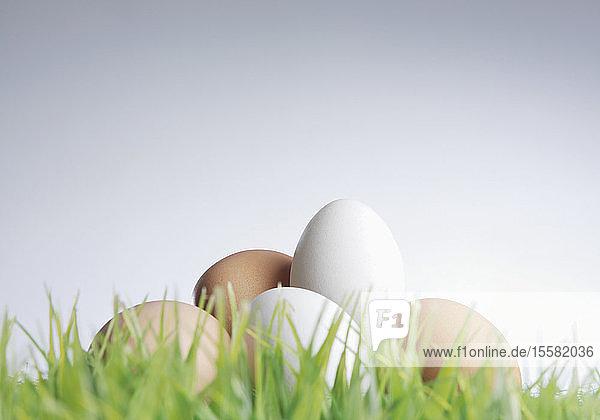Weiße und braune Eier mit Gras