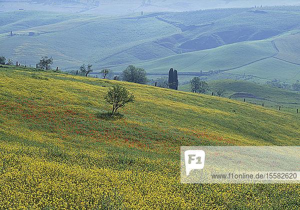 Italien  Toskana  Blick auf die Hügel im Sommer