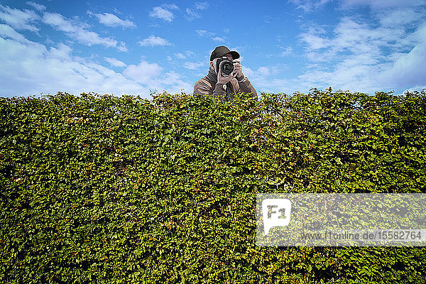 Paparazzi with camera behind hedge