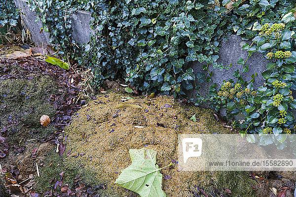 Deutschland  Komposthaufen
