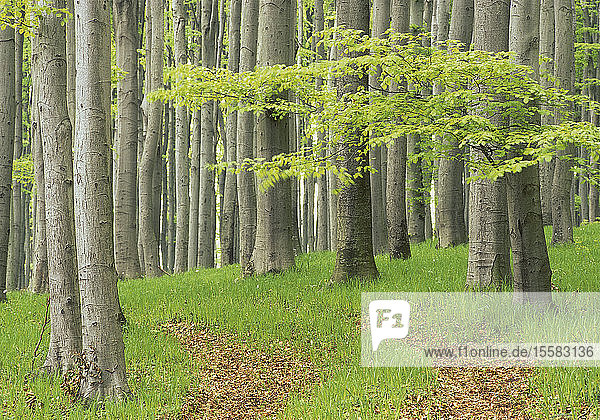 Österreich  Blick auf den Wald im Frühling