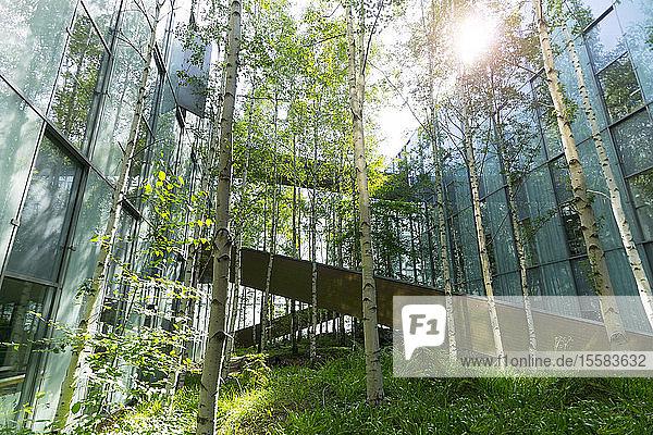 Deutschland  Hannover  Birken im Innenhof eines Bürokomplexes
