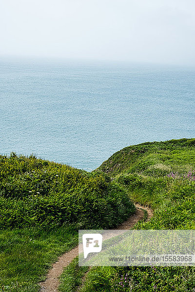 View along hiking trail on a cliff on the Pembrokeshire Coast  Wales  UK.