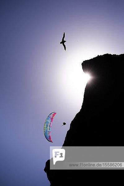 Gleitschirm gleitet in der Luft in der Nähe einer Klippe gegen blauen Himmel  Vik  Island