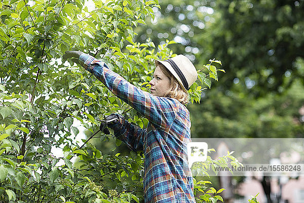 Mid adult woman pruning tree in her garden  side view
