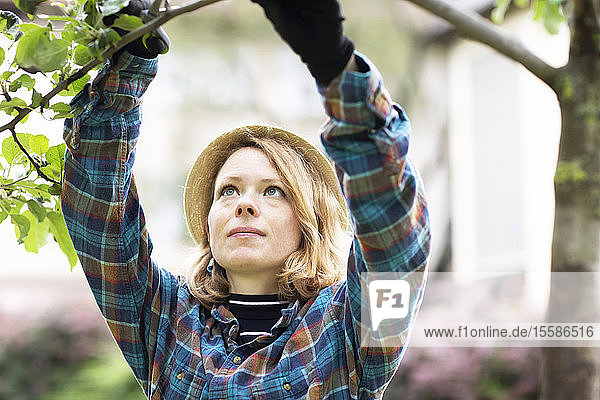 Mid adult woman pruning tree in her garden  shallow focus