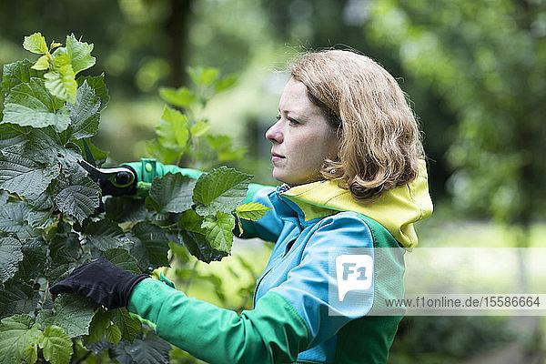 Mittelgroße erwachsene Frau beschneidet Baum in ihrem Garten  flacher Schwerpunkt