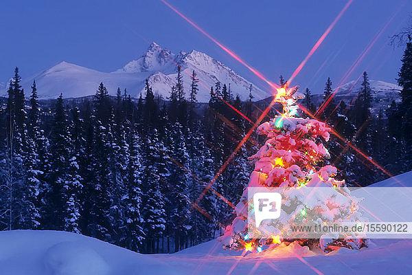 Decorated Christmas Tree @ Chugach Np Sc Alaska