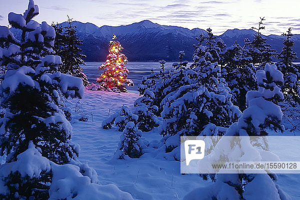 Christmas Tree Lit In Forest Southcentral Alaska Winter