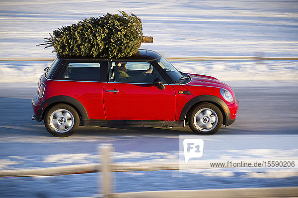 Mini Cooper Sports Car With Christmas Tree On Top Along Rural Road With A Split-Rail Fence  Southcentral Alaska  Winter