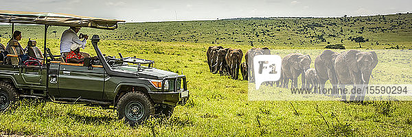 Guests in truck watch elephants (Loxodonta africana) walk past  Cottar's 1920s Safari Camp  Maasai Mara National Reserve; Kenya