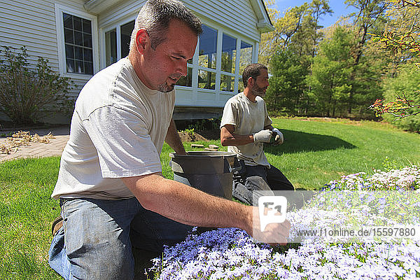 Landscapers weeding a flower garden at a home