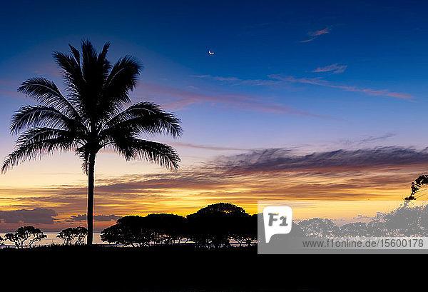 Sonnenaufgang und silhouettierte Palme entlang des Pazifischen Ozeans; Kauai  Hawaii  Vereinigte Staaten von Amerika