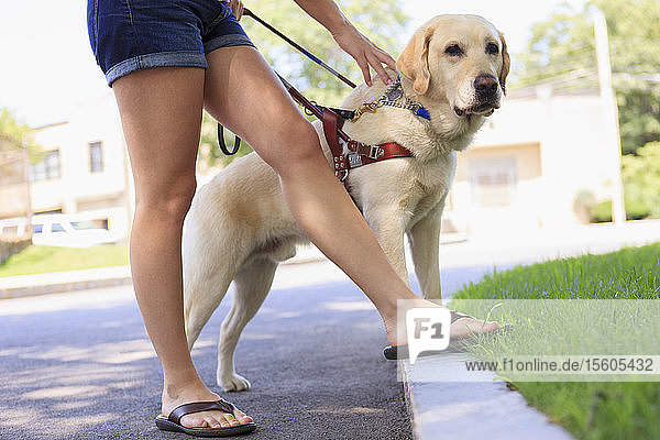 Service dog helping a woman with visual impairment at a curb